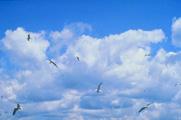ptice2.jpg